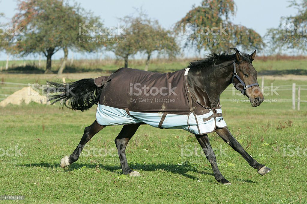 Nice horse running royalty-free stock photo