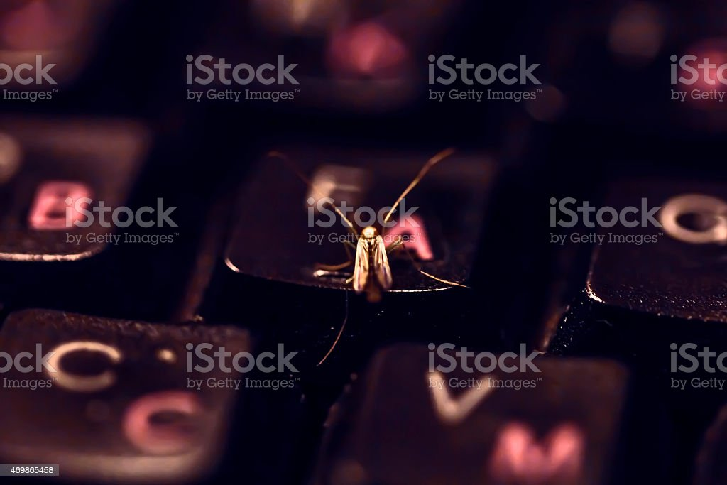 Nice insect on keyboard stock photo