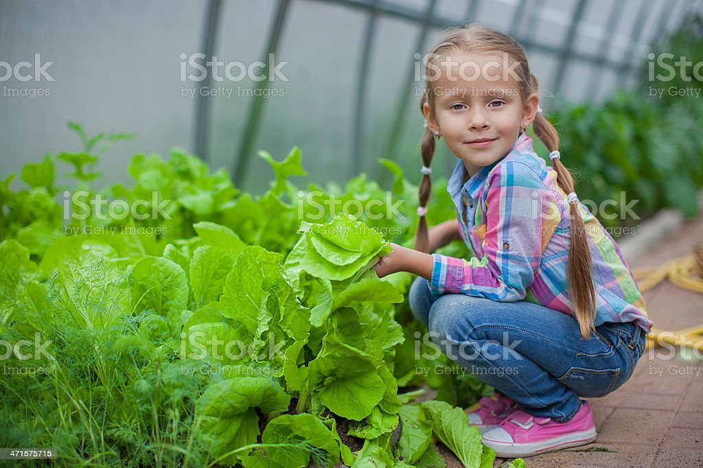 Nice little girl collects the crop in greenhouse royalty-free stock photo