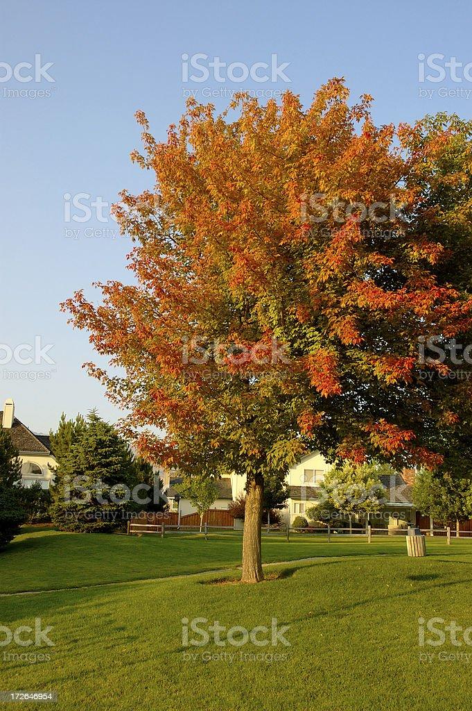 Nice neighborhood park royalty-free stock photo