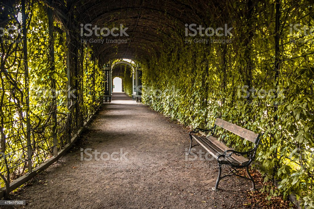 Nice Plant archway stock photo