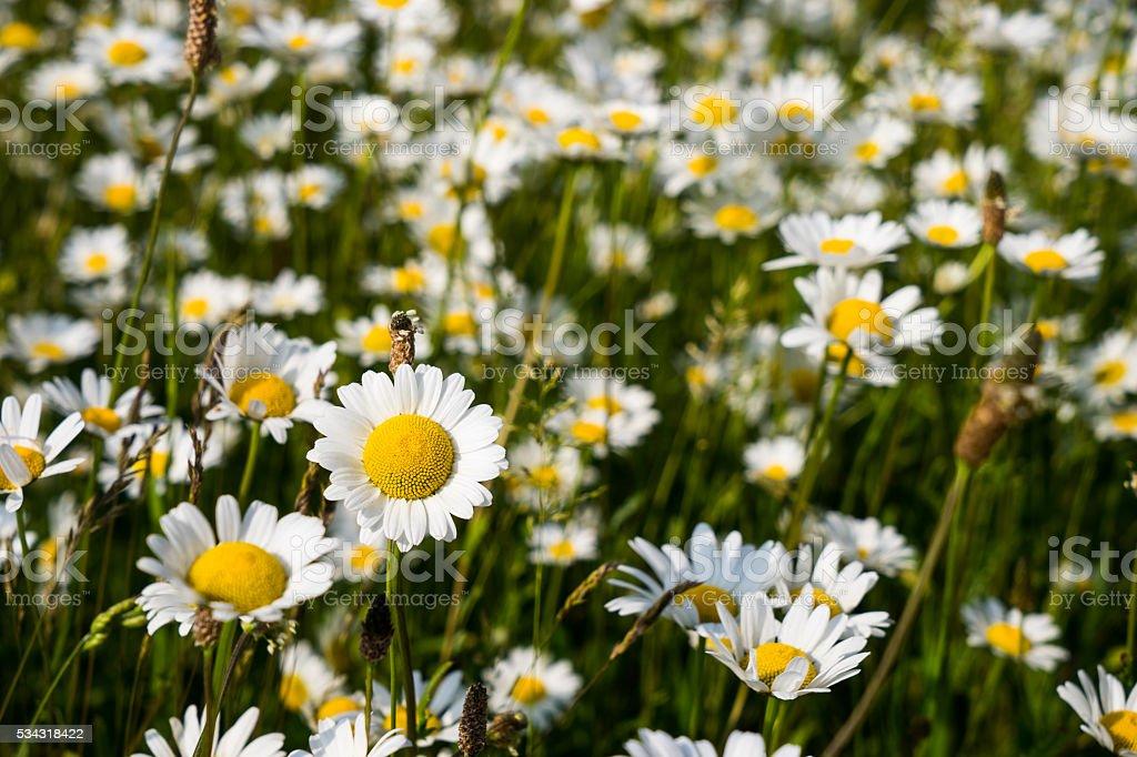 Nice spring flowers stock photo