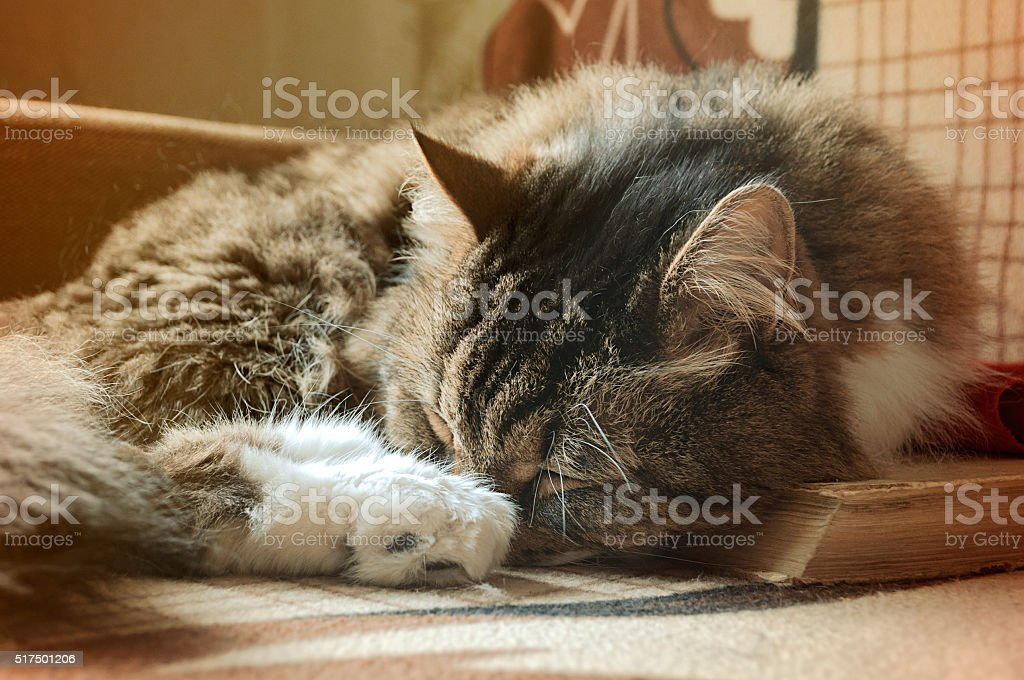 Nice tabby fluffy cat sleeping on the books. Vintage filter stock photo