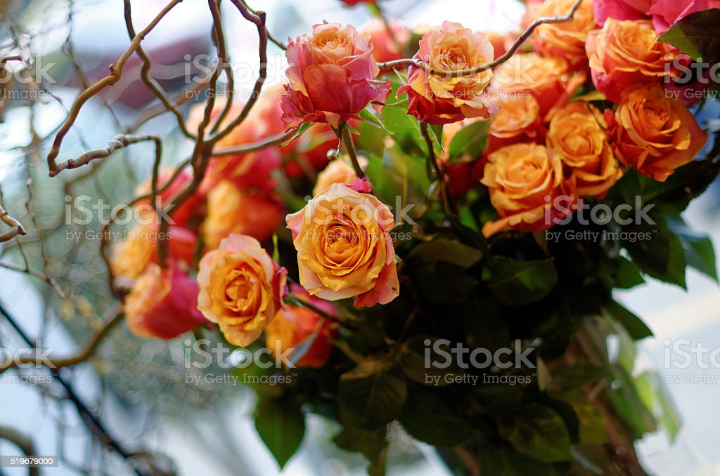 nice view in the window of a flower shop royalty-free stock photo