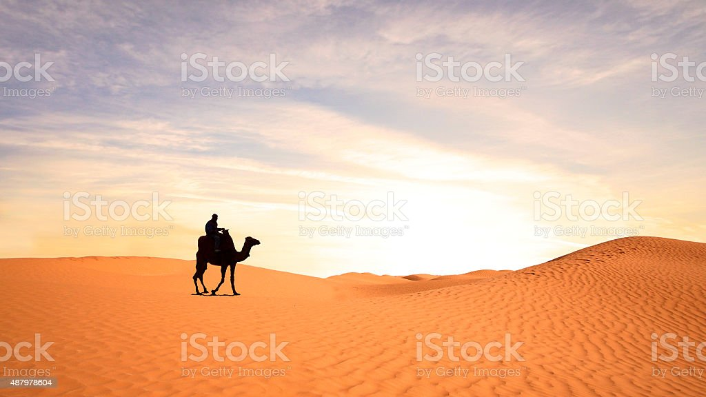 Nice view of a camel in Sahara stock photo