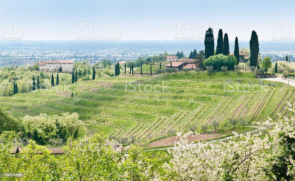Nice vineyard landscape in Collio, Friuli Venezia Giulia, Italy stock photo