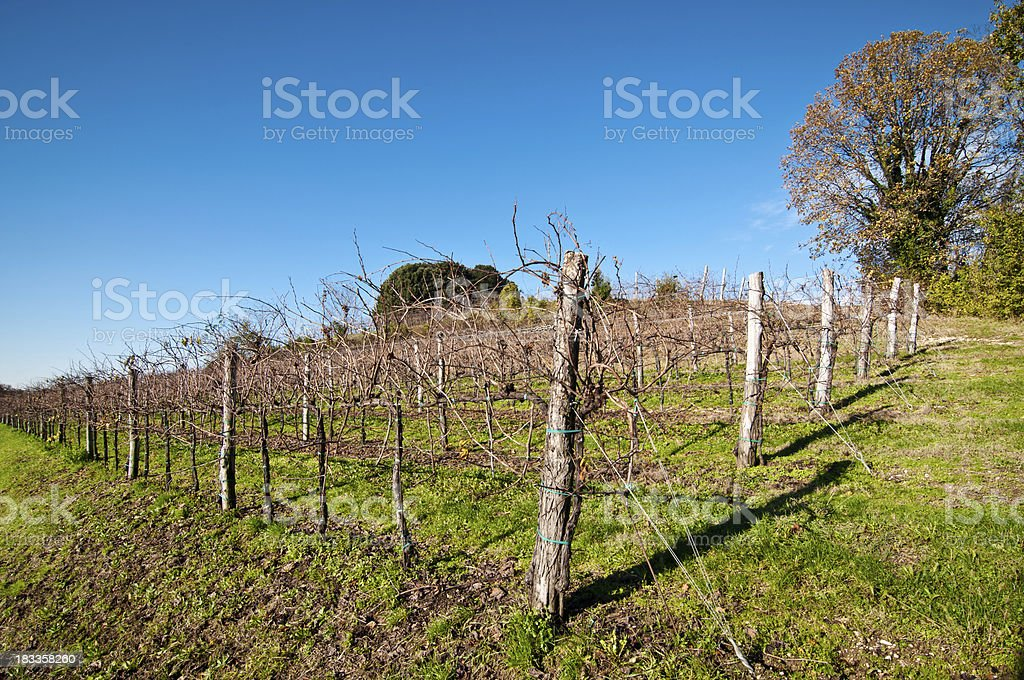 Nice vineyard landscape in north of Italy stock photo