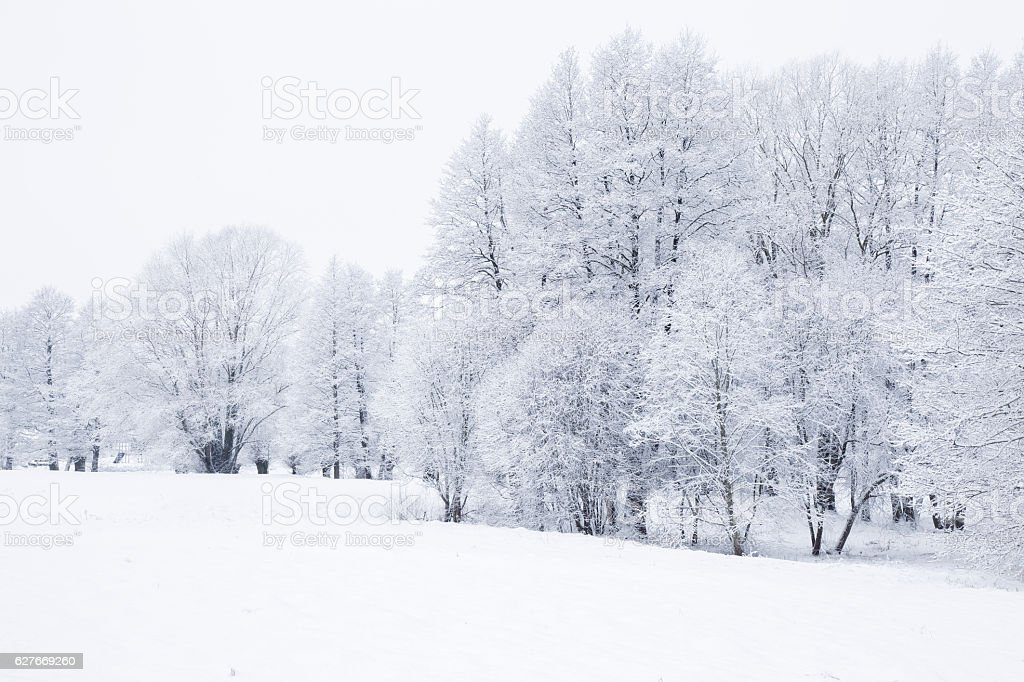 Nice winter day in the park after blizzard. Very beautiful. stock photo