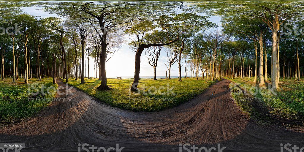 360° Nienhagen Gespensterwald stock photo