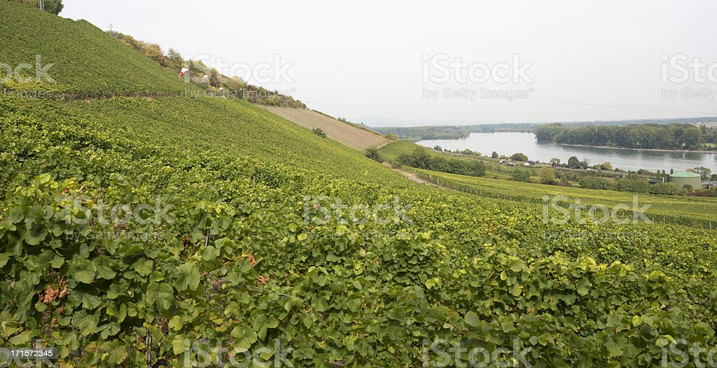 Nierstein, Vineyards, Riesling, Rhine River, Rhein, Germany royalty-free stock photo