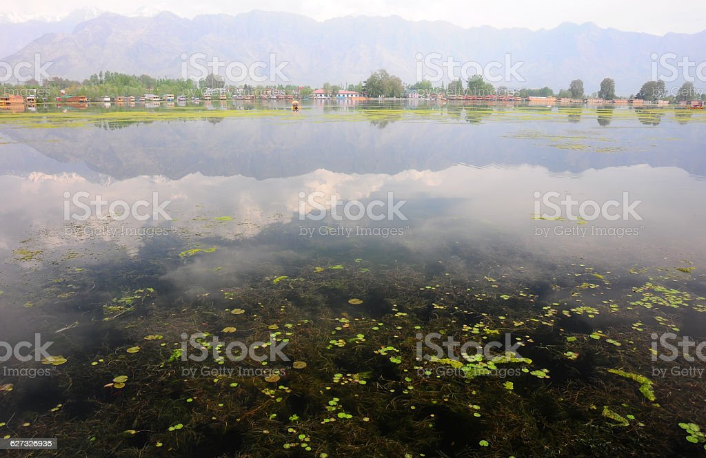 Nigeen Lake in the morning, Kashmir, India stock photo
