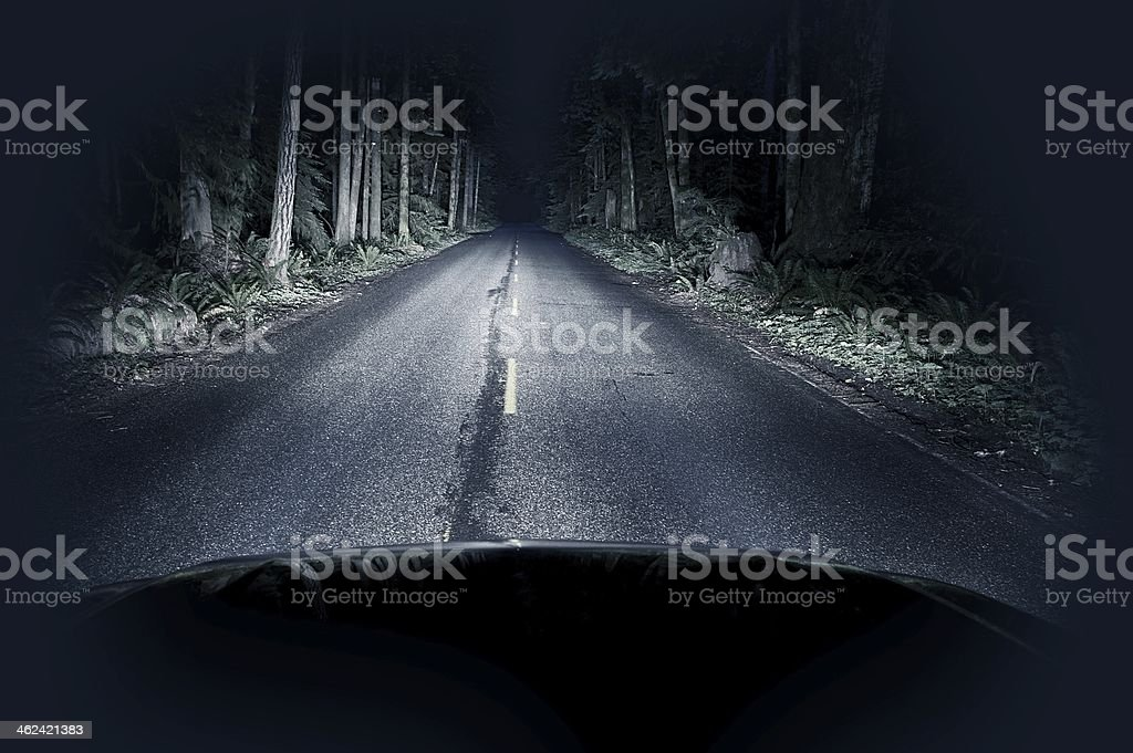 Night Driving Thru Forest stock photo