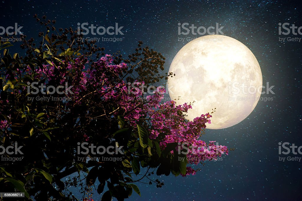 Beautiful cherry blossom with Milky Way star in night skies; full...