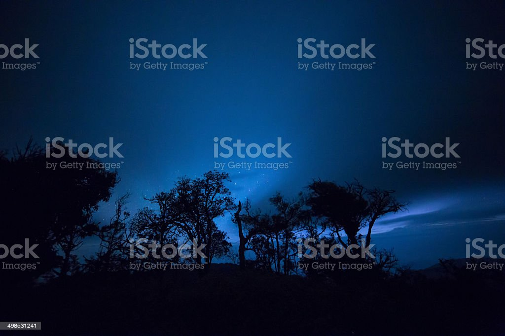 Night forest with stars royalty-free stock photo