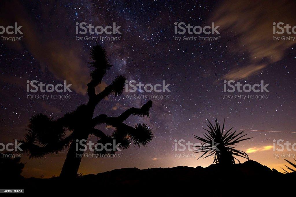 Night in Joshua Tree National Park stock photo