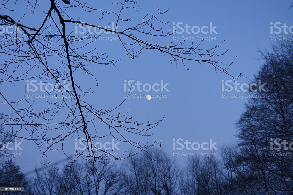Night in the forest royalty-free stock photo