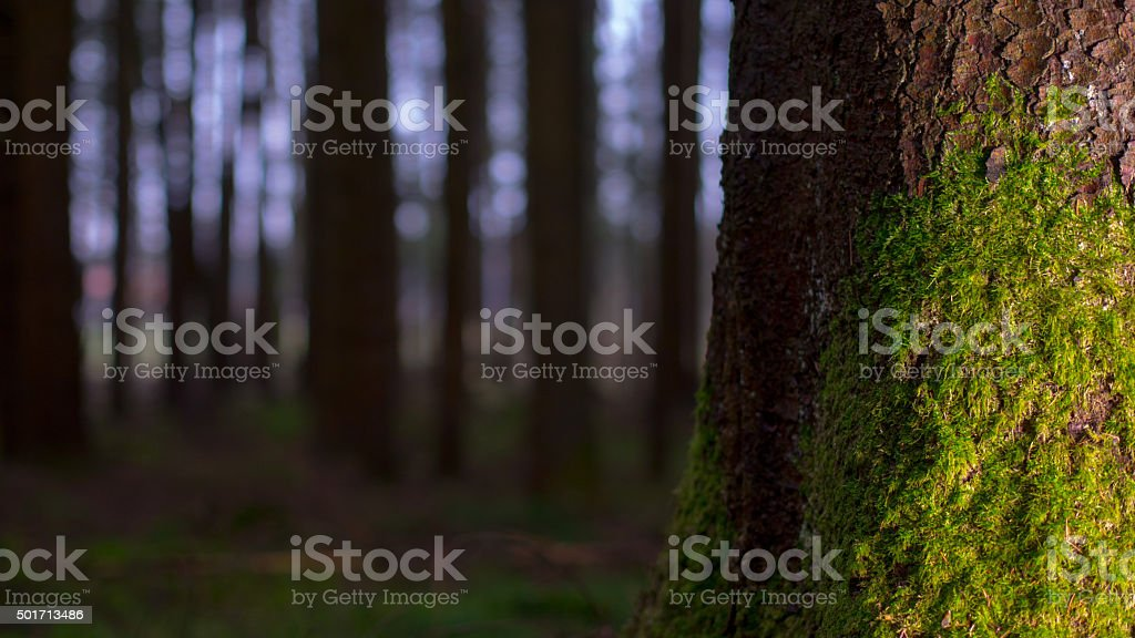 Night in the forest stock photo