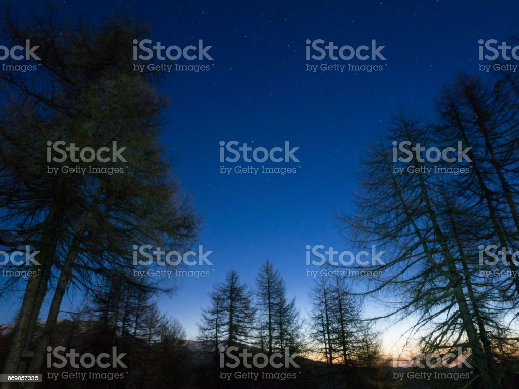 night in the forest with stars in the sky stock photo
