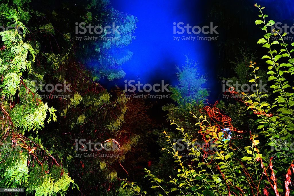 night in the garden stock photo