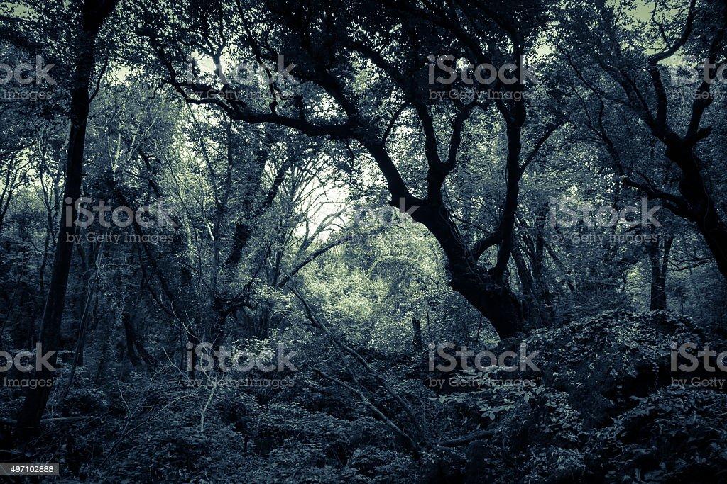 Night in the Sasseto woods stock photo