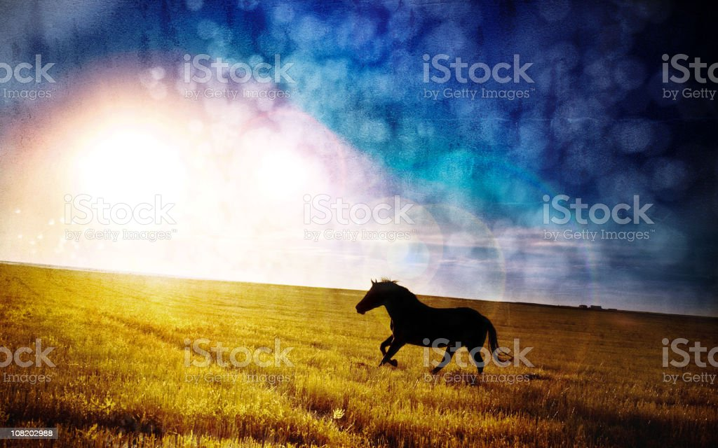 Night Mare - Horse galloping across field royalty-free stock photo