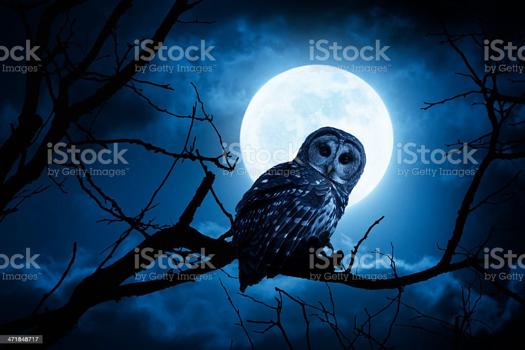 Night Owl With Bright Full Moon and Clouds stock photo