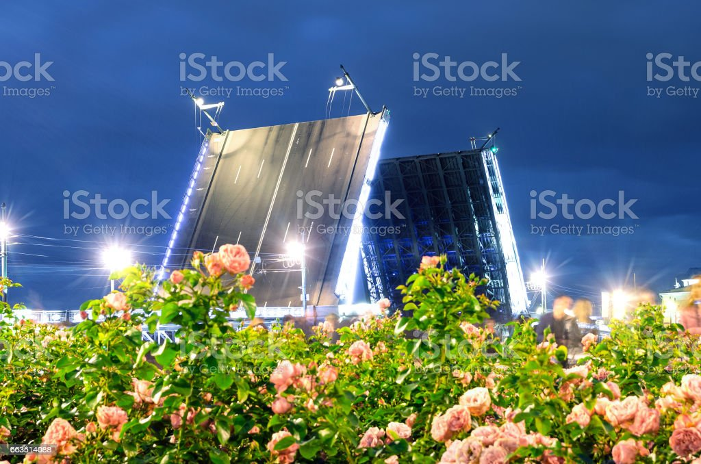 Night palace bridge in the foreground Blooming roses and bright lights St. Petersburg stock photo