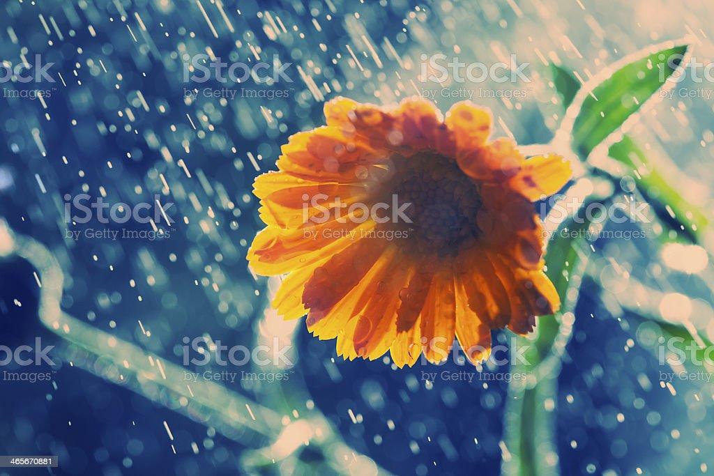 Night rain royalty-free stock photo