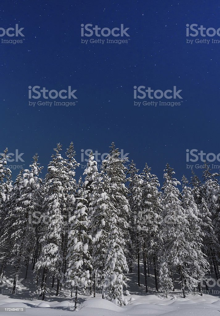 night sky and forest royalty-free stock photo