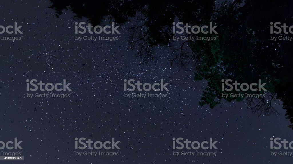 Night sky in forest stock photo