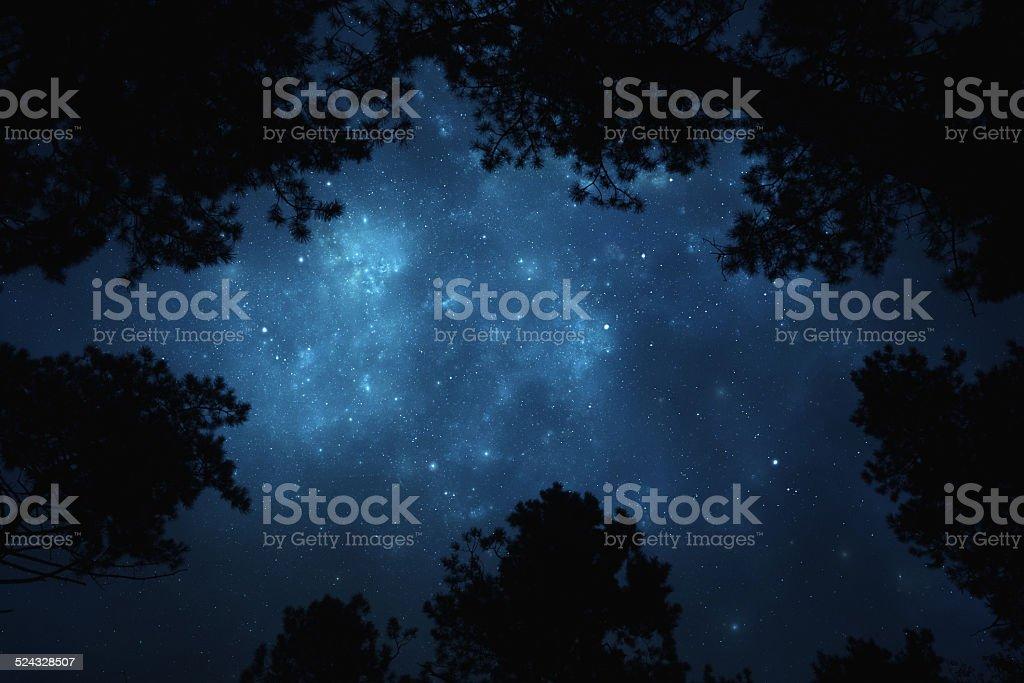 Night sky through trees stock photo