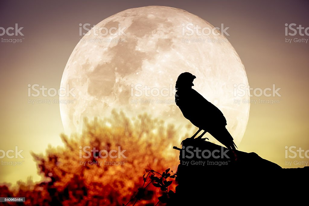 Night sky with full moon, tree and silhouette of crow. stock photo