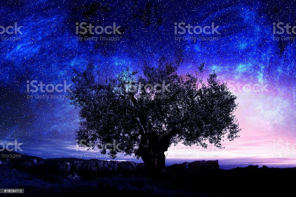 Night sky with tree . Mixed media stock photo