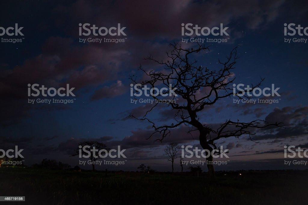 Night sky with trees stock photo