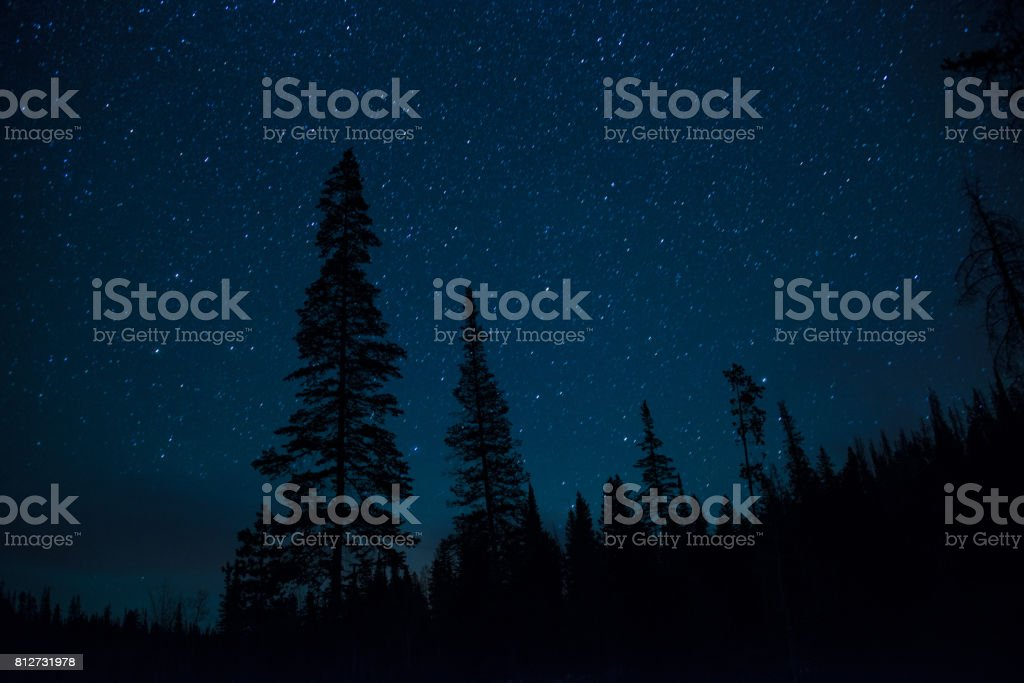 Night stars twinkling above a pine tree forest stock photo