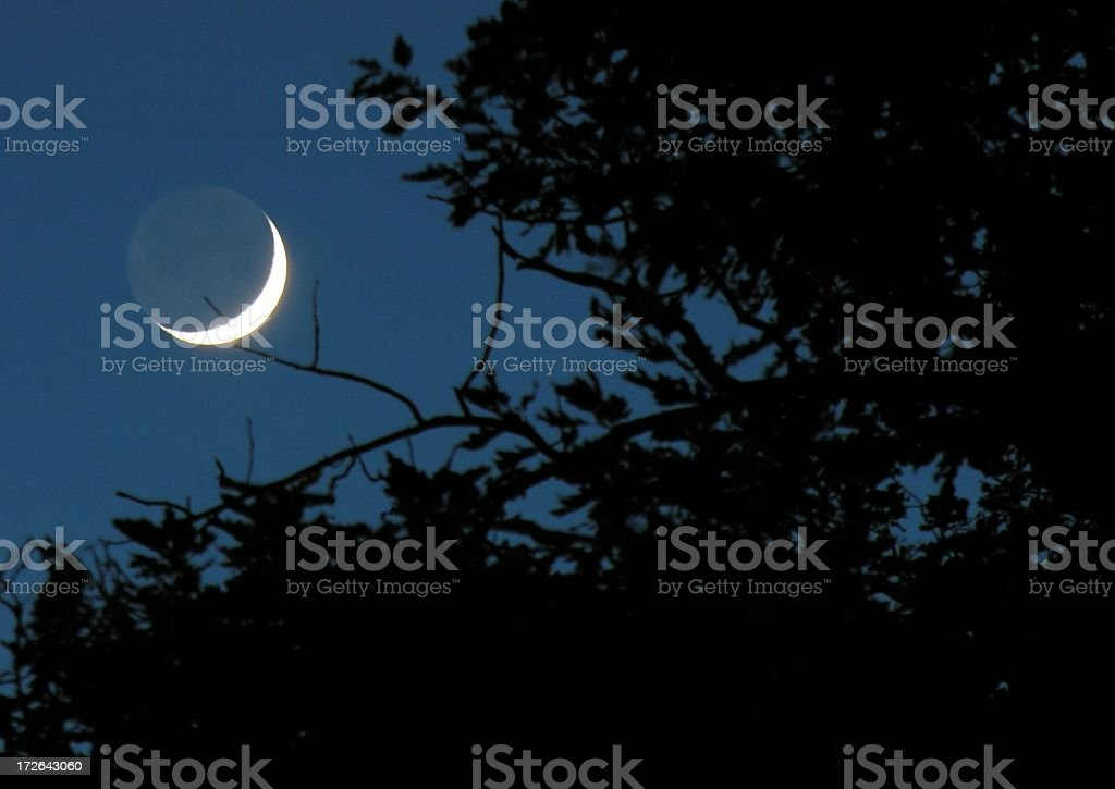 Night time view of a quarter moon though branches stock photo