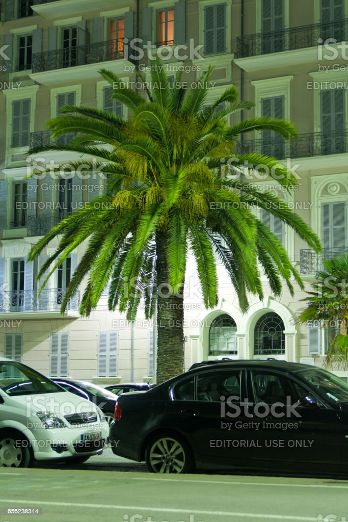 Night view Palm trees in Nice. Cote d'Azur. Mediterranean resort. France. stock photo