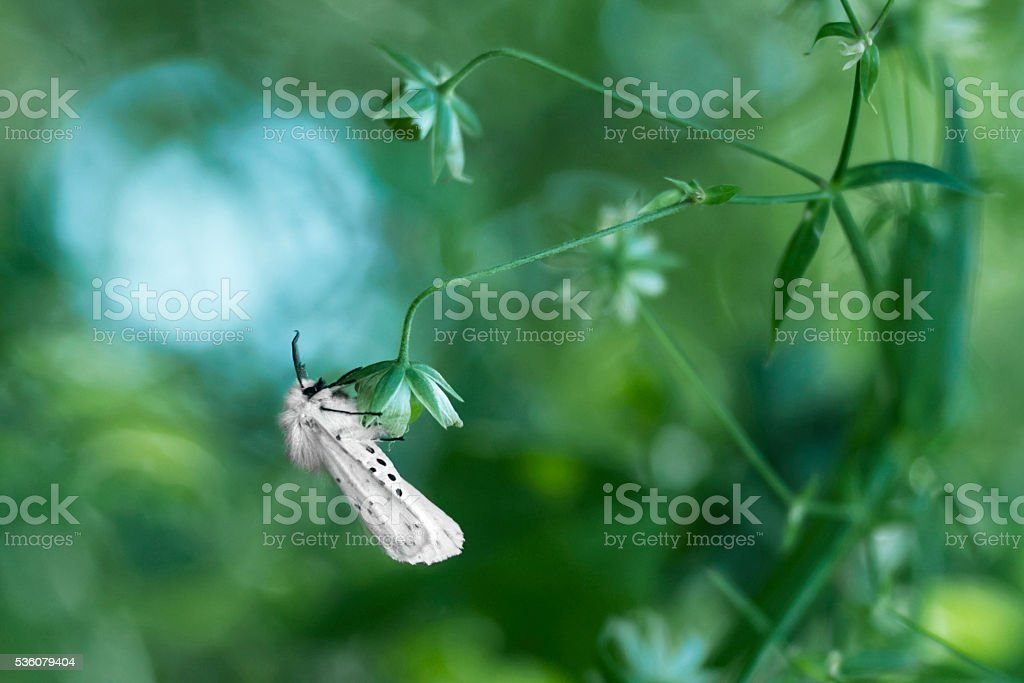 Night white butterfly stock photo
