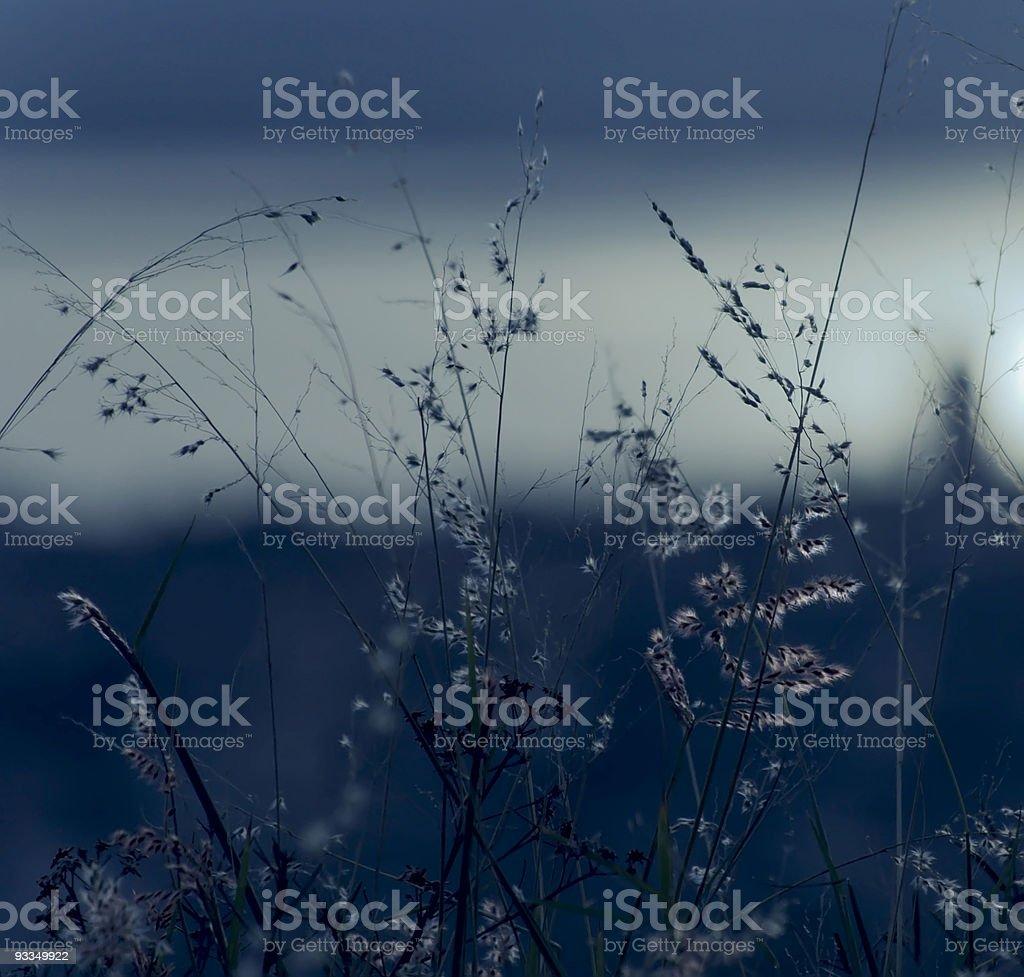 Night, wind and light stock photo
