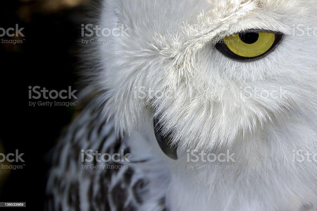 Nightbird stock photo