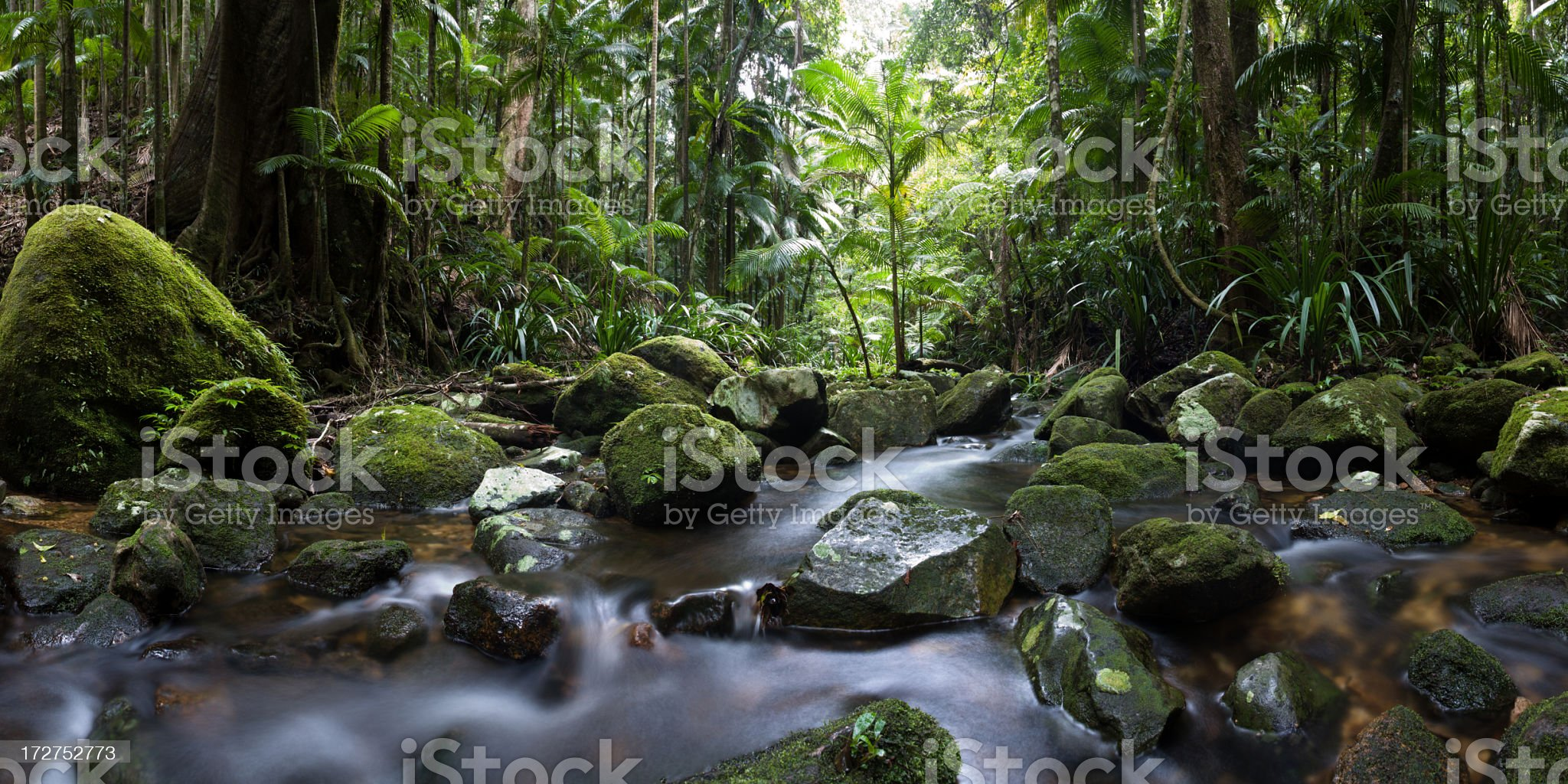 Nightcap Ranges National Park Rainforest Panorama royalty-free stock photo