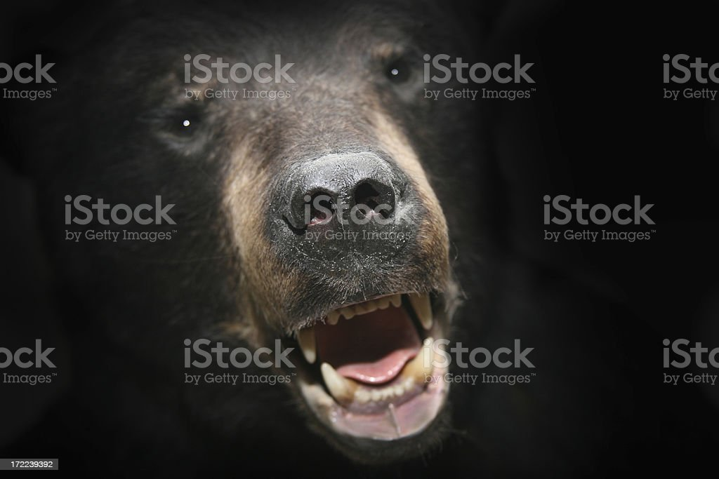 nightmare bear stock photo