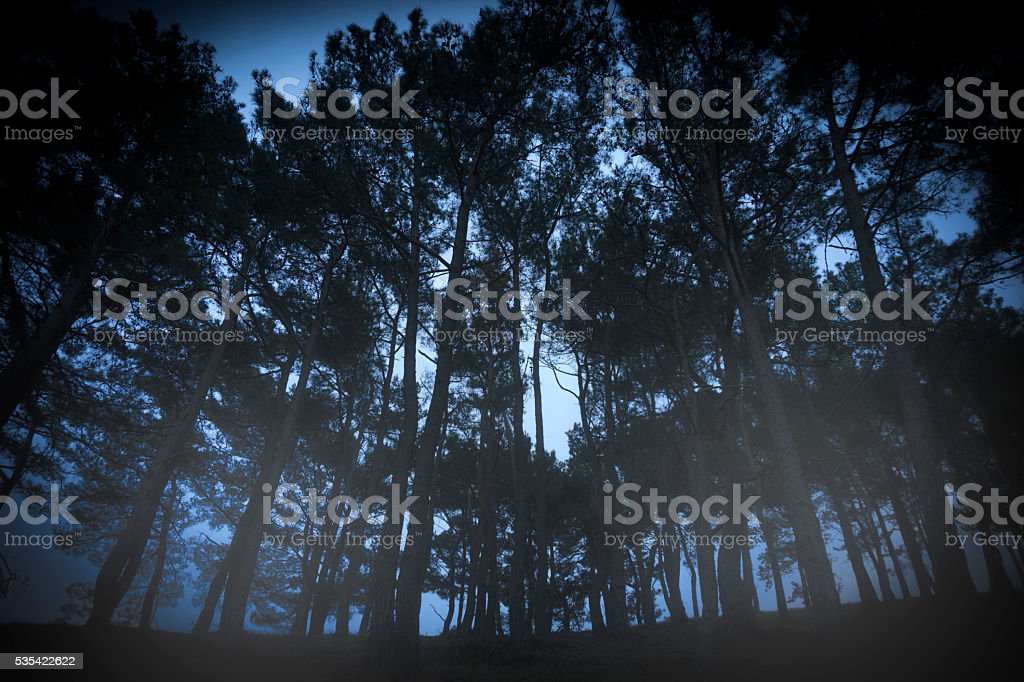 Nightmare in forest stock photo