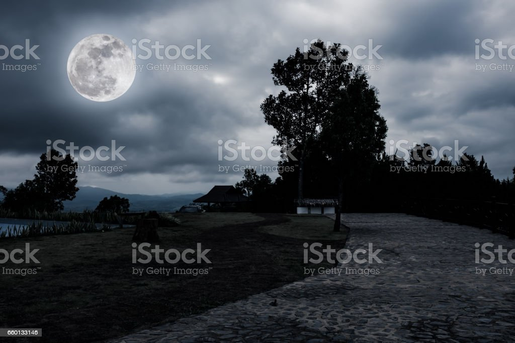 Nighttime with landscape of moonlight in a beautiful green forest. stock photo