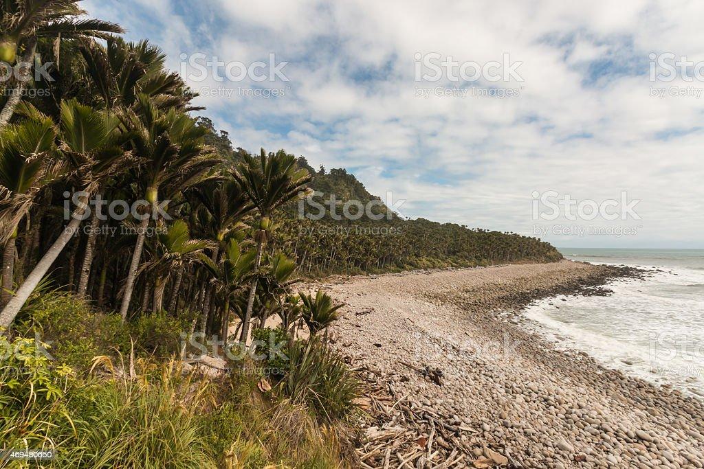 nikau palms growing along West Coast in New Zealand stock photo