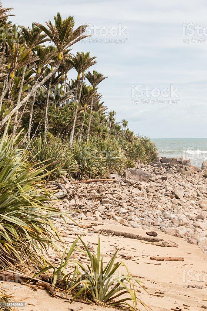 Nikau palms growing on New Zealand coast stock photo
