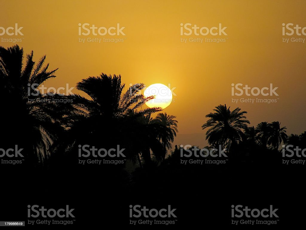 Nile sunset and palm royalty-free stock photo