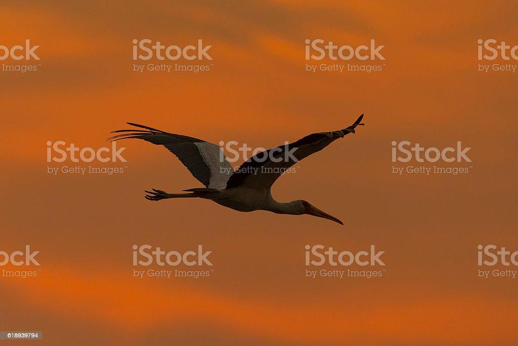 Nimmersatt bei Sonnenaufgang stock photo