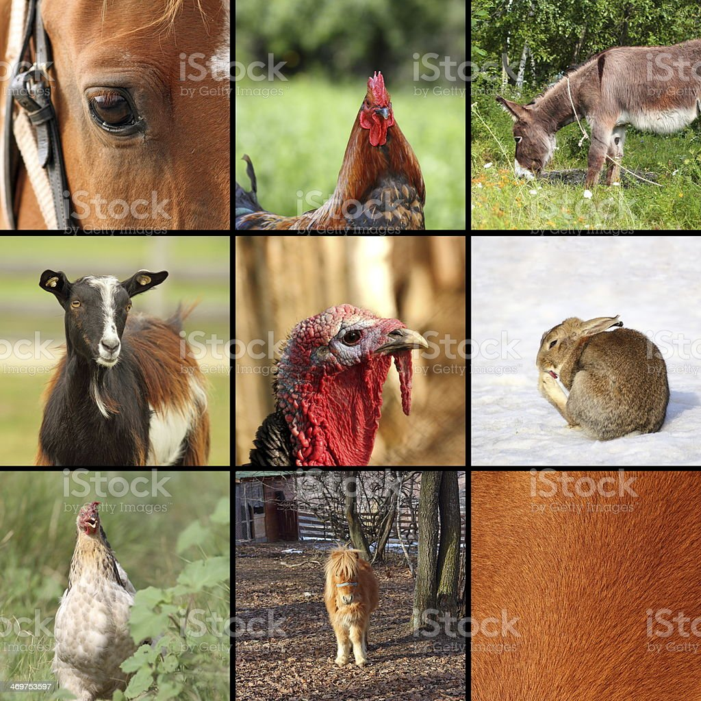 nine animals from the farm stock photo