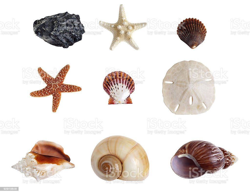 Nine Assorted Sea Shells Isolated on White with Clipping Path stock photo
